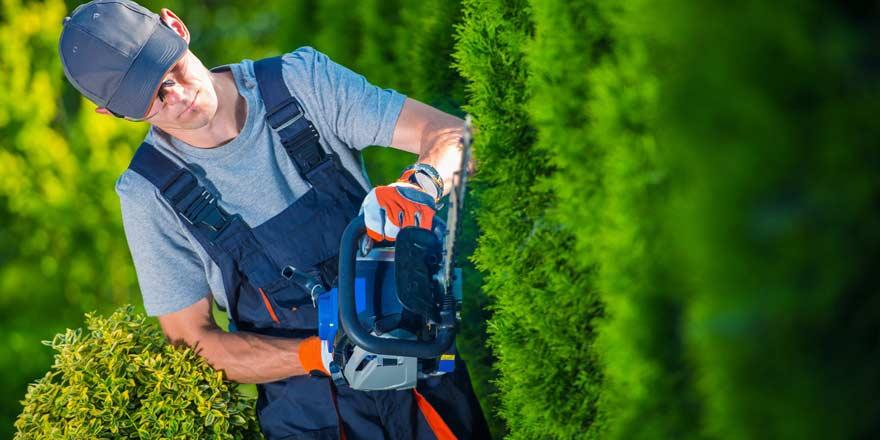 entretien de vos parcs et jardin