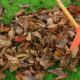 Recyclage des feuilles mortes